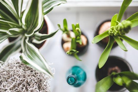 Oczyść powietrze w swoim domu