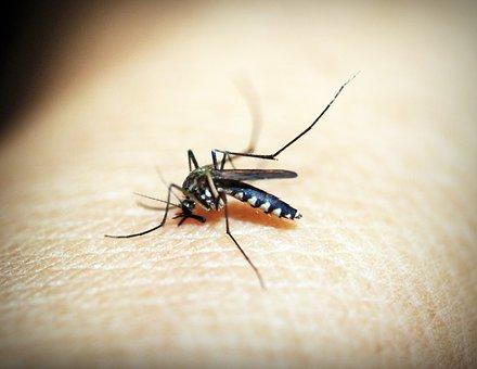 Domowe sposoby na ukąszenia owadów-sprawdź czy je znasz