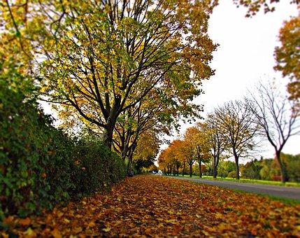 Sposób na jesienną chandrę – aromaterapia