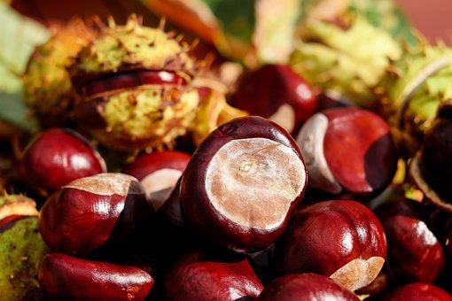 Jesienny luksus czyli kosmetyki z kasztana DIY (przepisy)