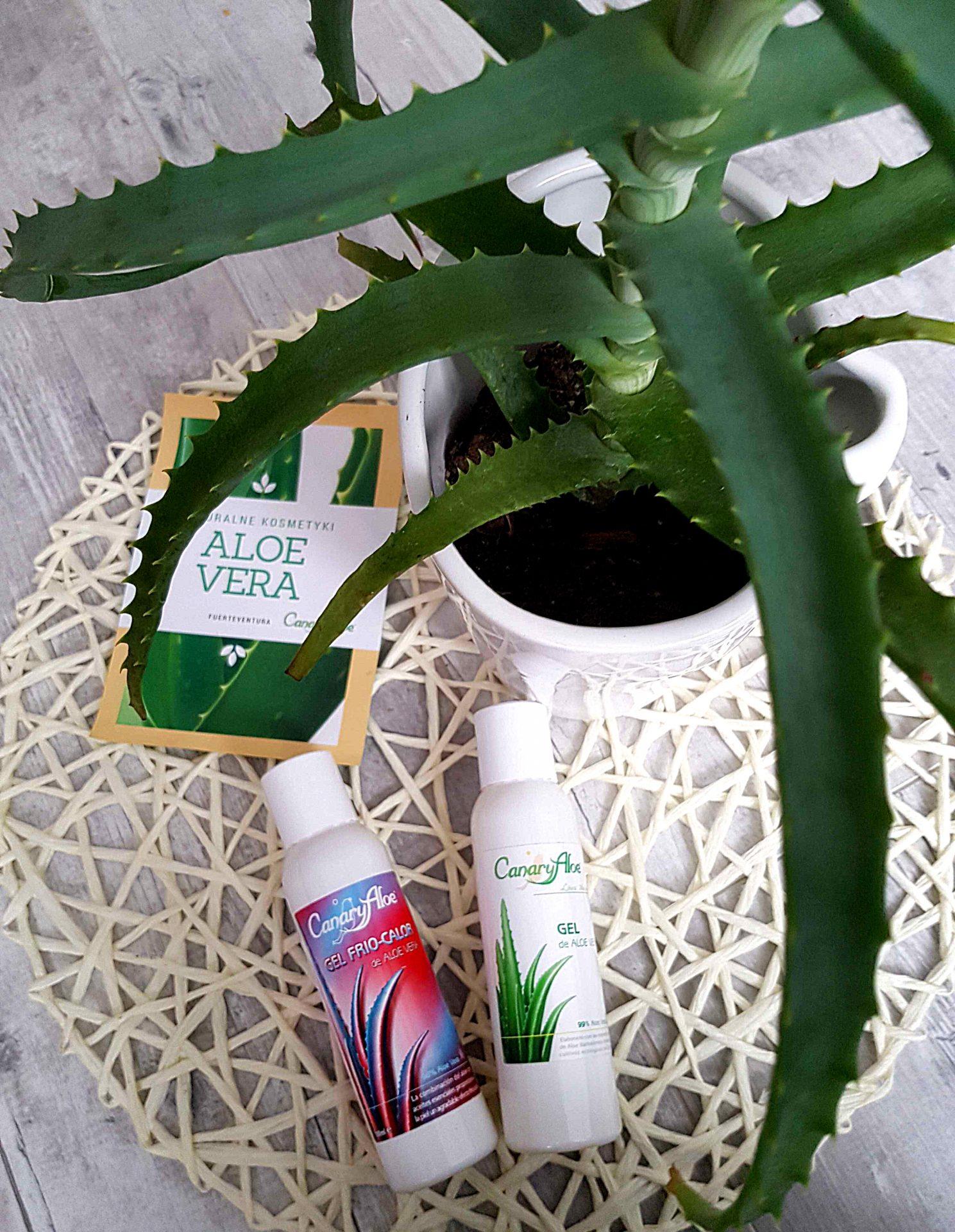 Żel aloesowy – kosmetyk o wielu zastosowaniach